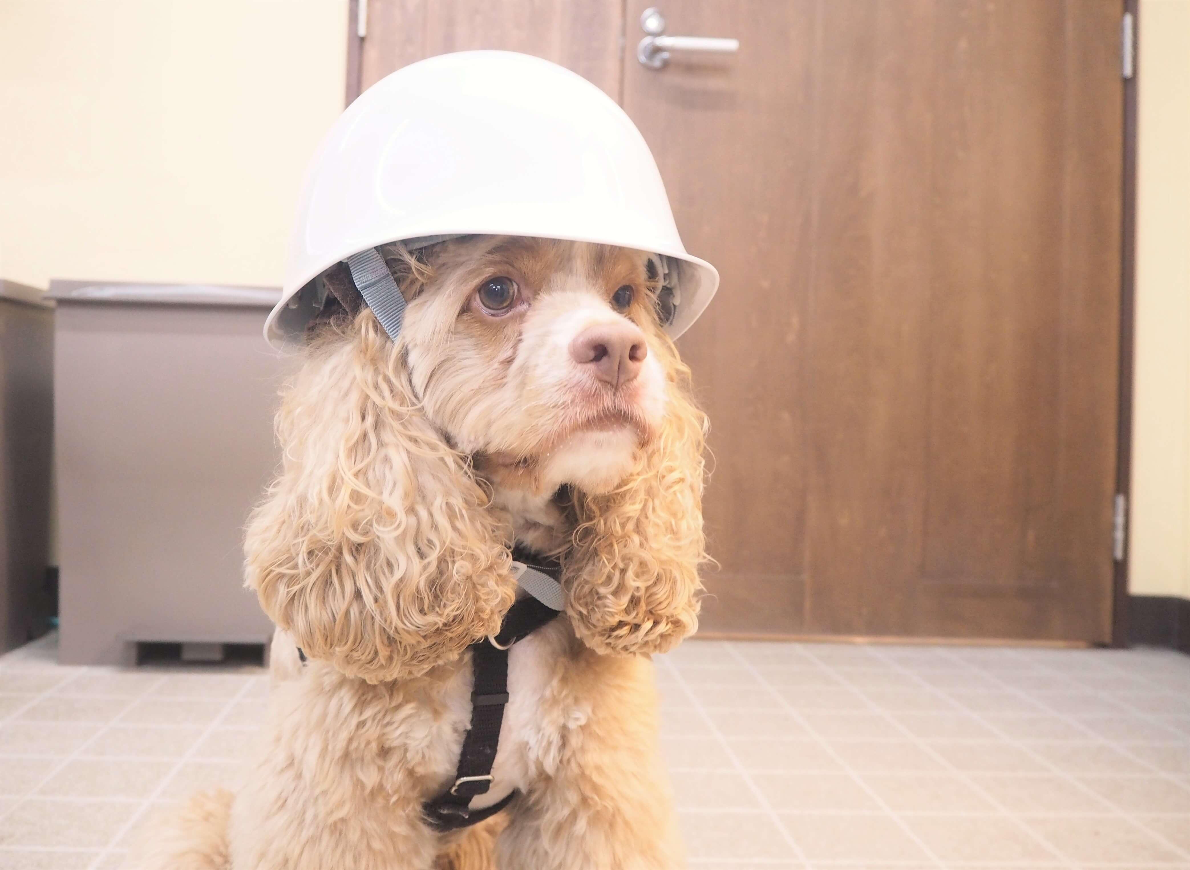 4月20日(土) 防災セミナー開催!いざという時のために愛犬と防災に備えよう!【横浜ドッグウィーク】