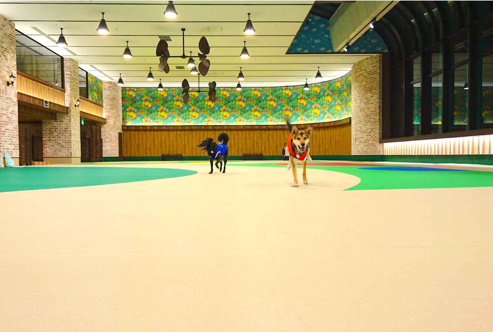 【横浜ドッグウィーク期間イベント】4月14日(土)ドッグパーク開催 フィットネス体験イベント