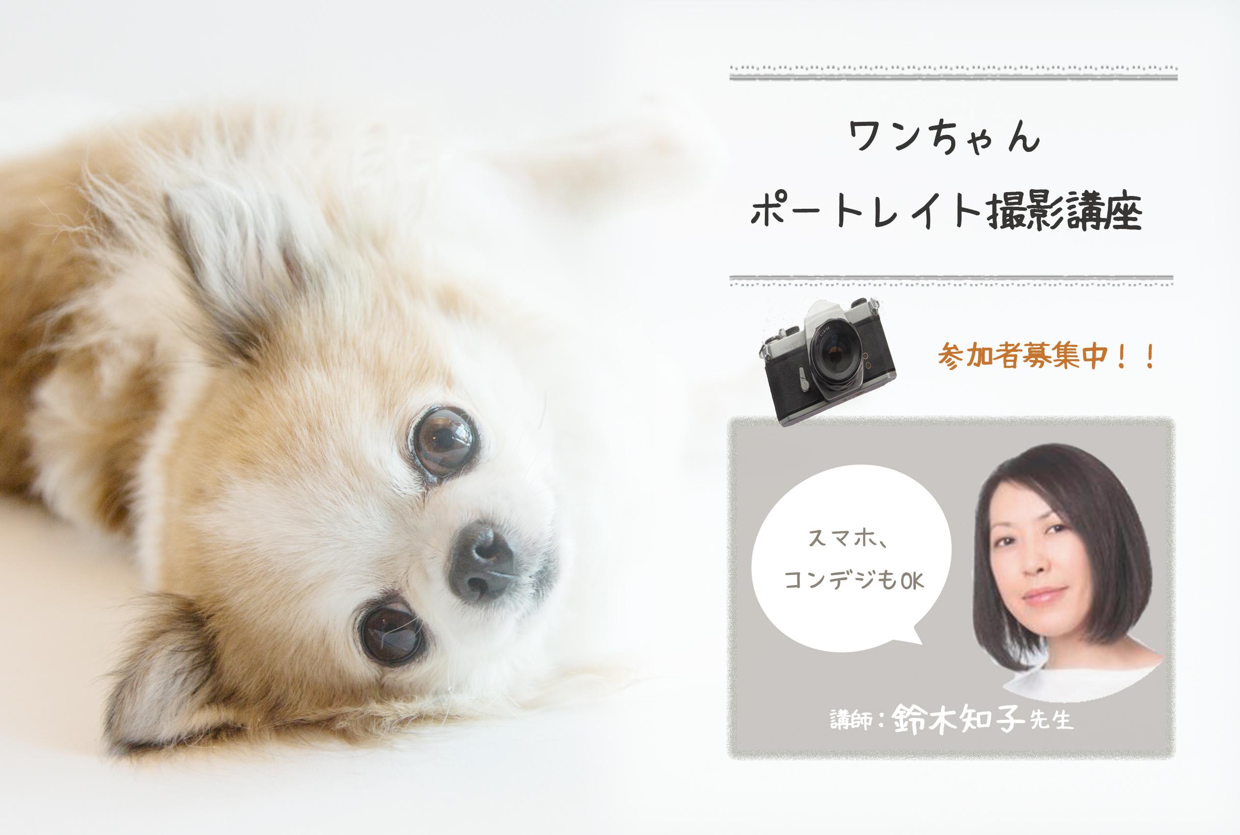2月24日(土) スマホ・コンデジもOK!ワンちゃんポートレイト撮影講座