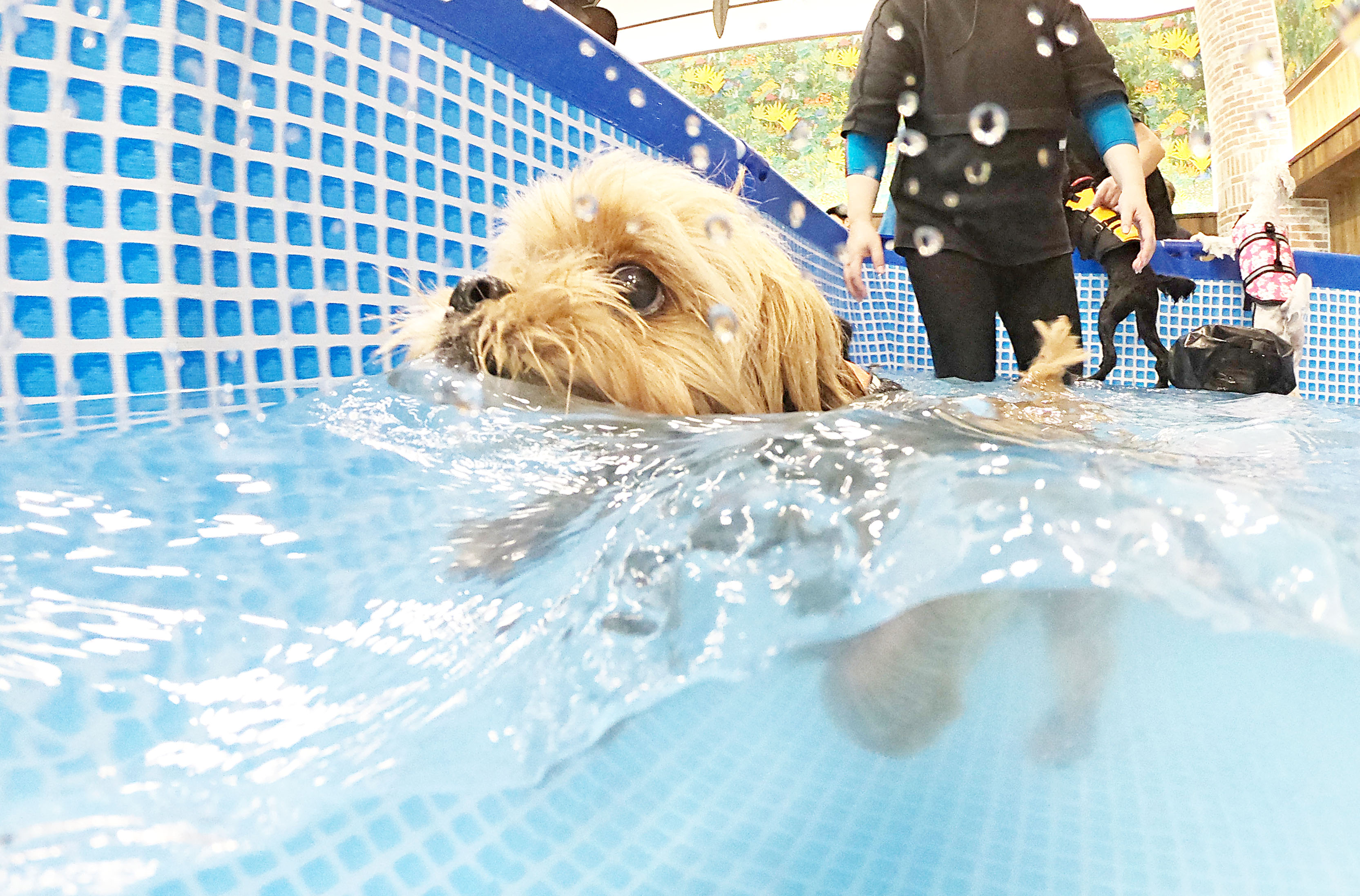 12月16日(日)真冬のプール教室開催!!寒い冬でも温水プールで楽しもう!!