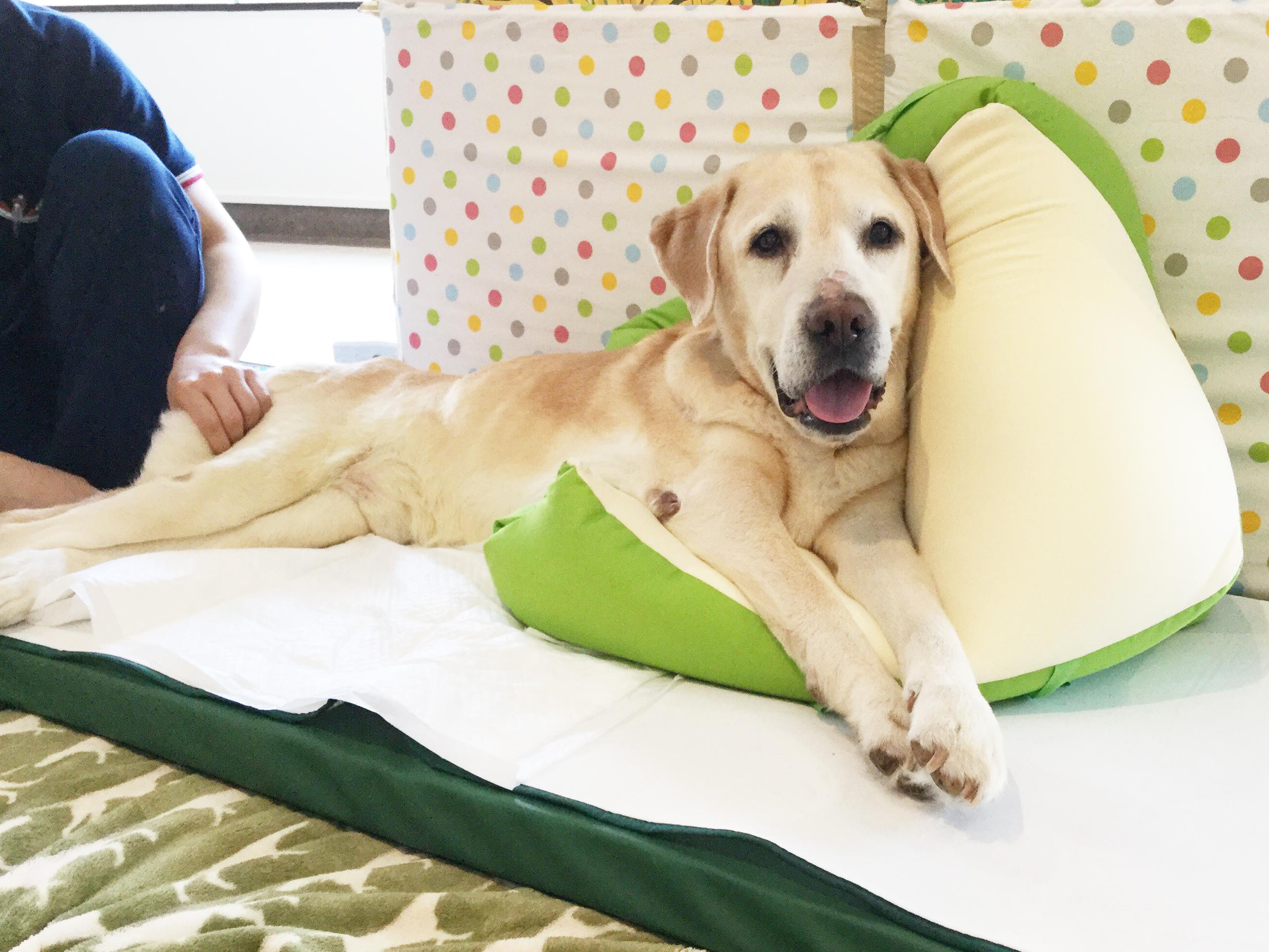 4月20日(土) WANCOTT2周年特別セミナー 愛犬の「老い」と「介護」を考える【横浜ドッグウィーク】