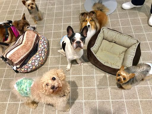 【介護・老犬ケア】一時預かり&デイケア体験キャンペーン実施!
