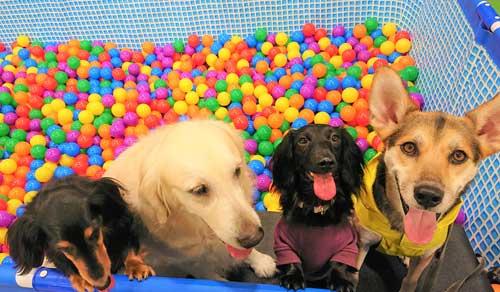 2月11日(火・祝)ドッグパーク全面開放&ボールプール開催!