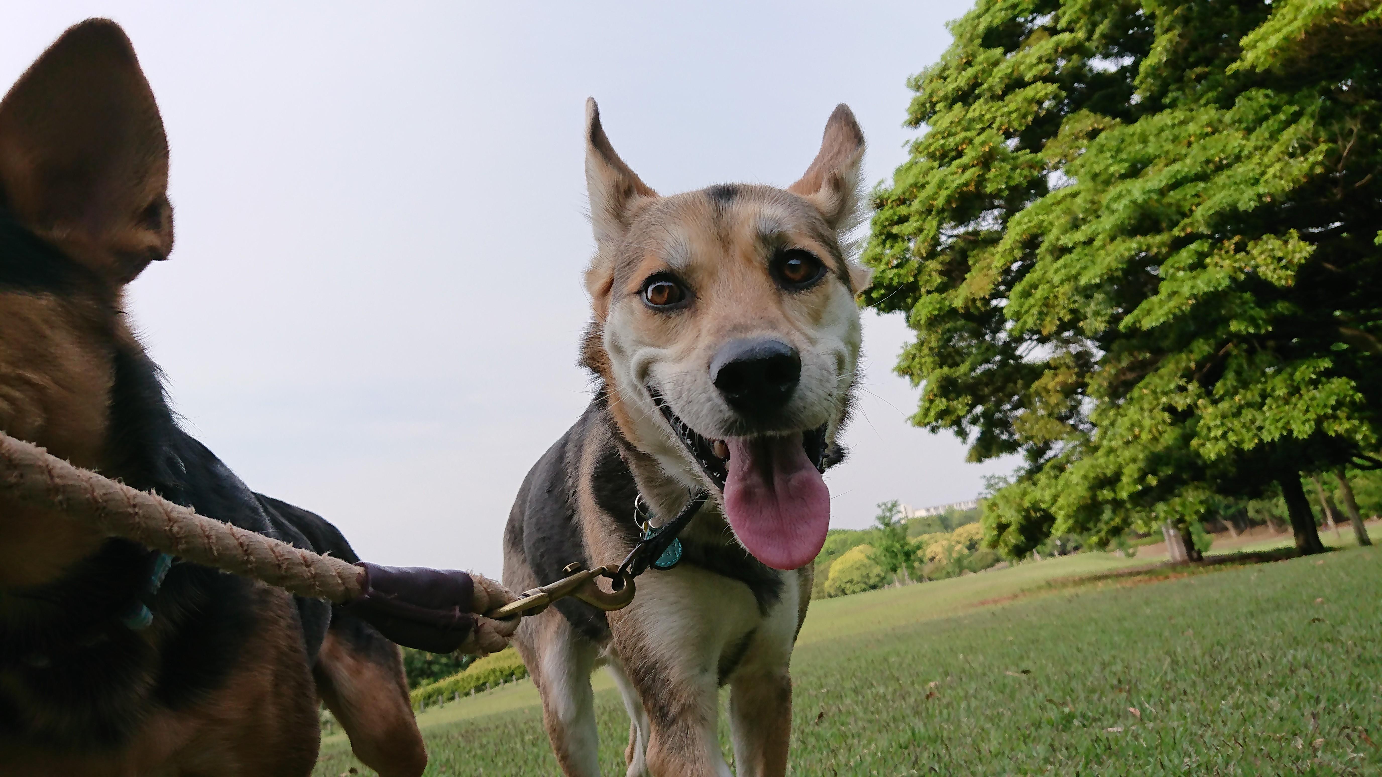 2月19日(水) 犬のボディランゲージセミナー(あいさつ編)