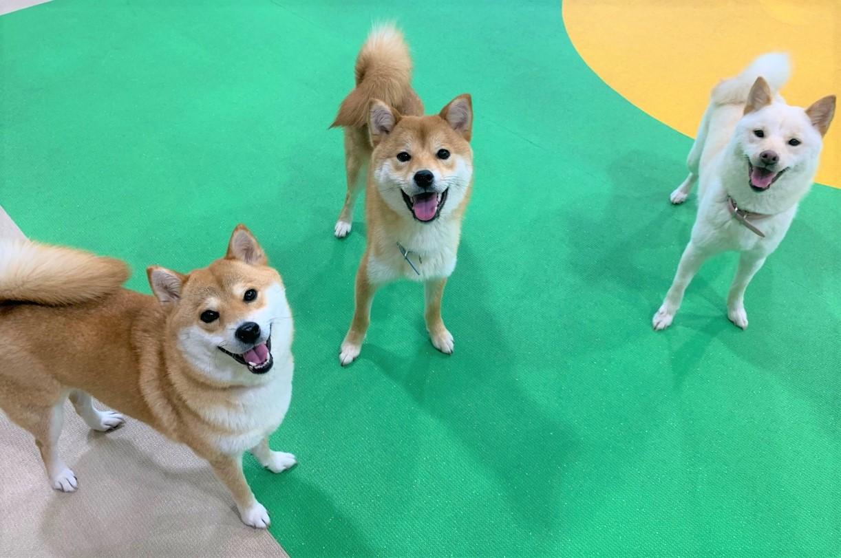 【満枠のため予約締切】1月21日(火) 第9回WANオフ会開催!《和犬の会》