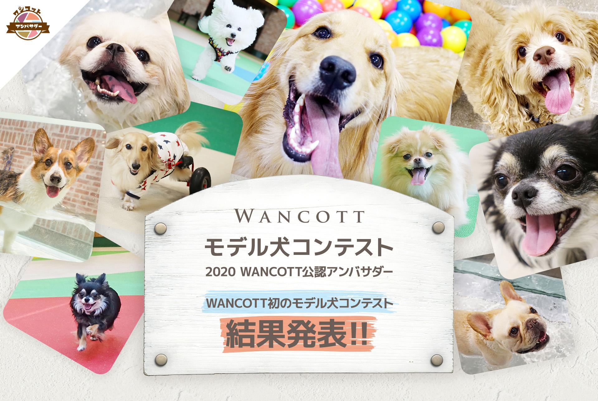 『WANCOTTモデル犬 コンテスト』~2020 WANCOTT公認アンバサダー~ 結果発表!