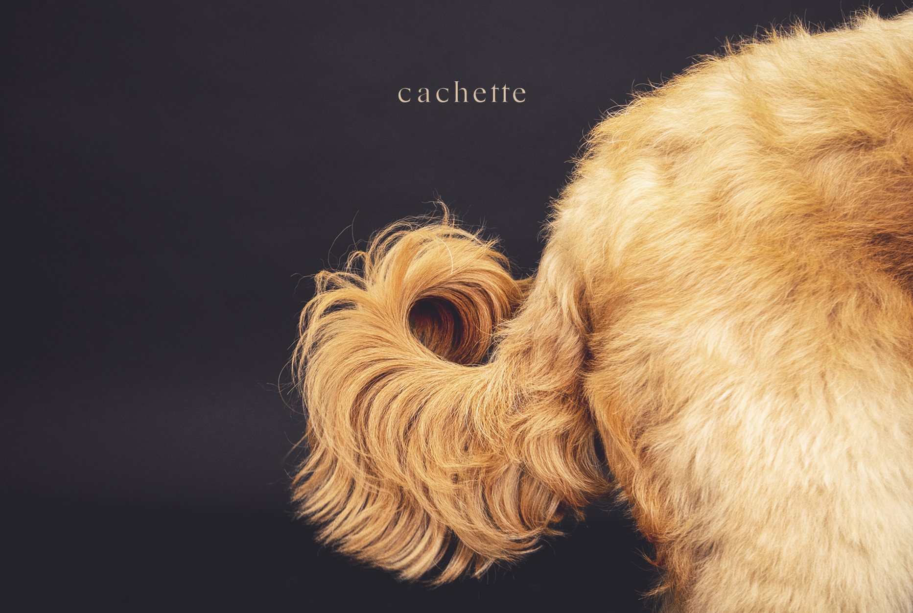 """犬猫の飼い主さま向け完全招待制の隠れ家サロン""""cachette(カシェット)"""" へご招待"""