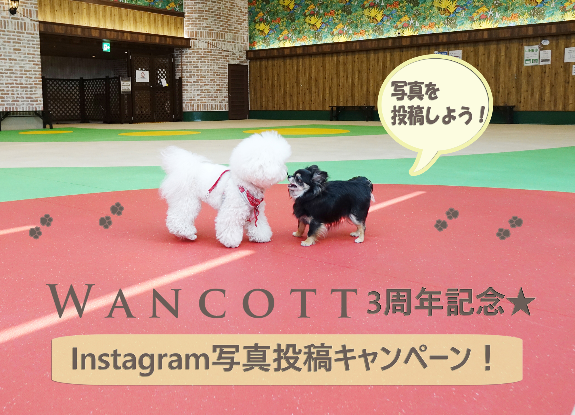 WANCOTT3周年!instagram写真投稿キャンペーン開催!
