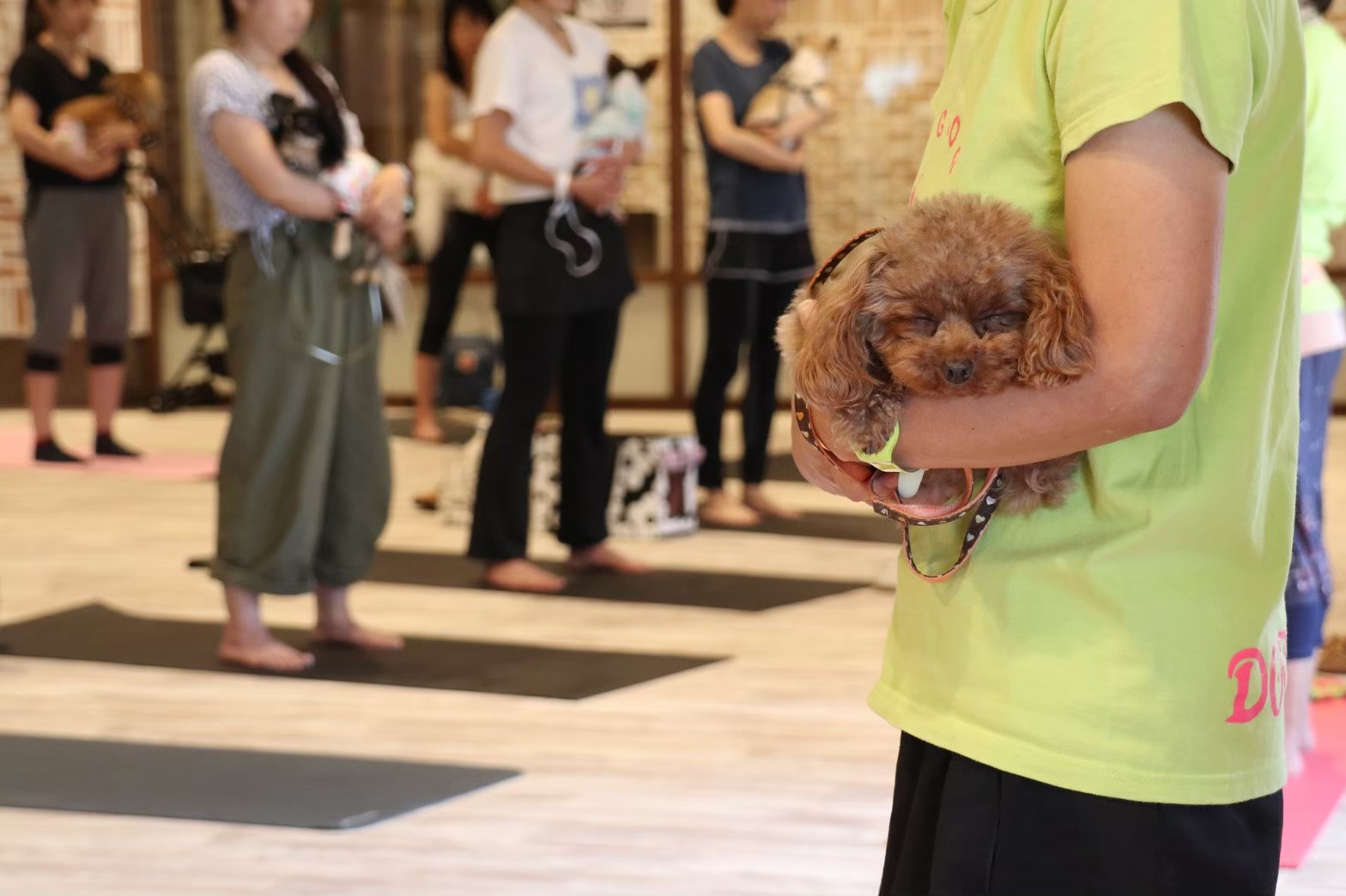 満枠のためご予約受付締切 10月25日(日)「ワンコット yoga」開催!