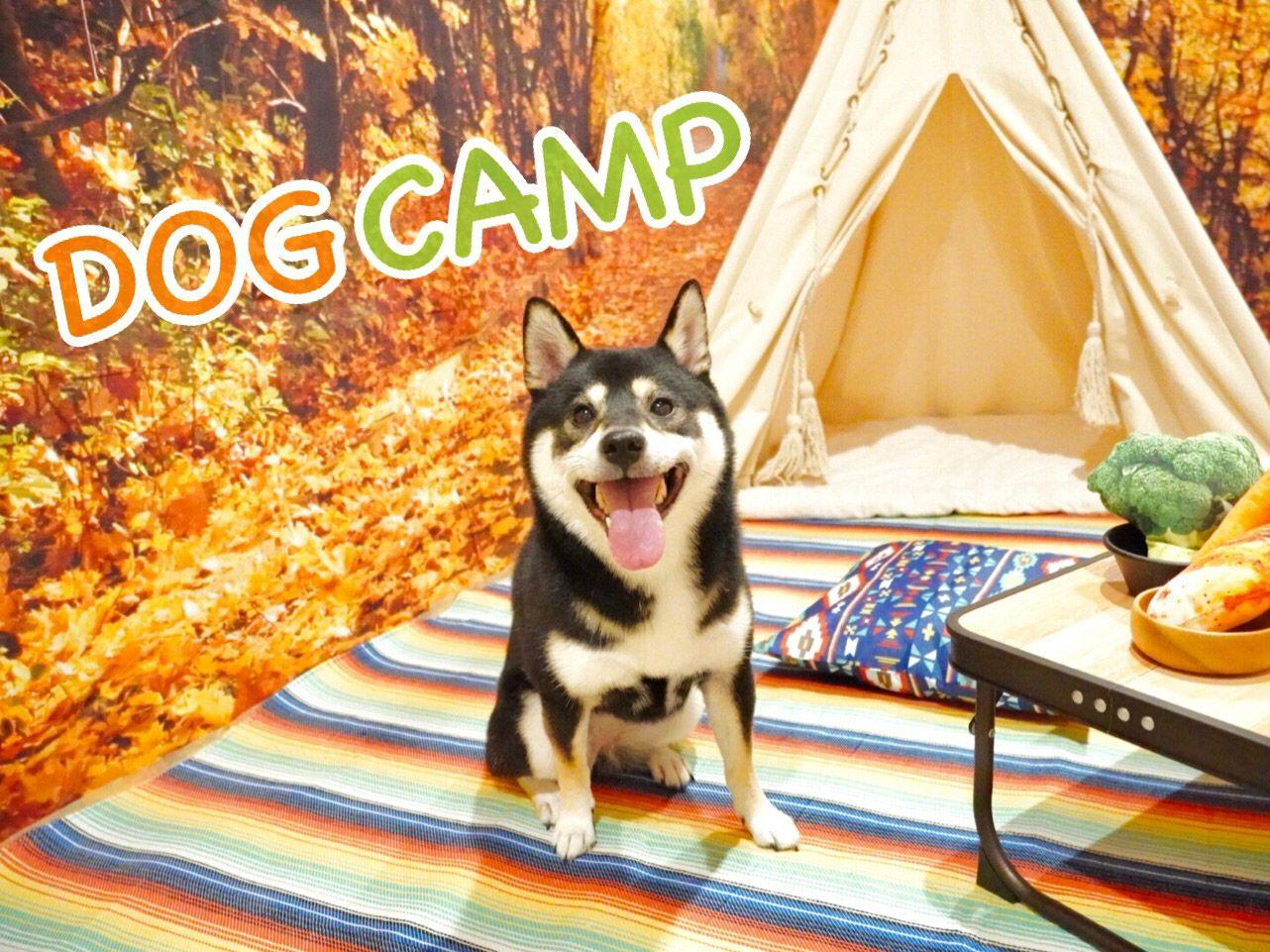 【ホテル】☆DOG CAMP(ドッグキャンプ)☆開催!