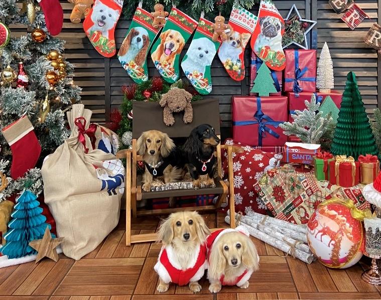 12月19日(土) 20日(日)ドッグパーク全面開放!クリスマスイベント開催!