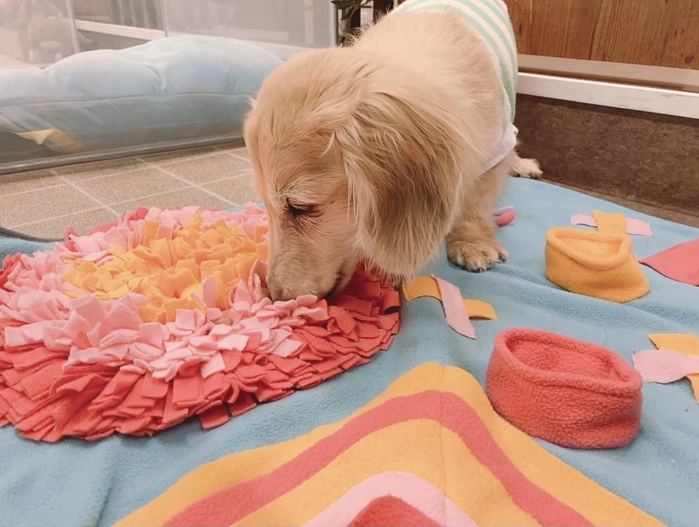 介護・老犬ケア『いきいきシニアライフ!わんわんチャレンジ!』(通称:わんチャレ!)延長のお知らせ