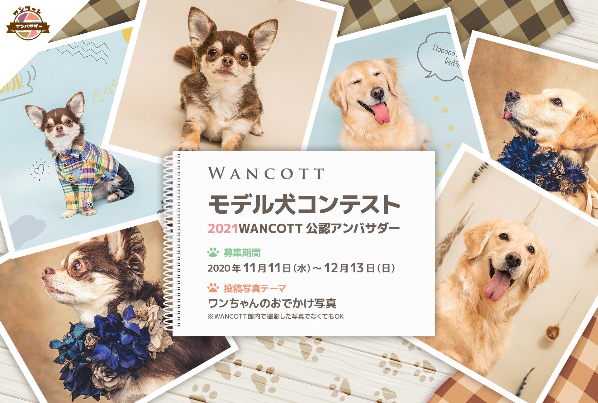 11月11日(水)より応募受付開始! 第2回『WANCOTTモデル犬 コンテスト』 開催!
