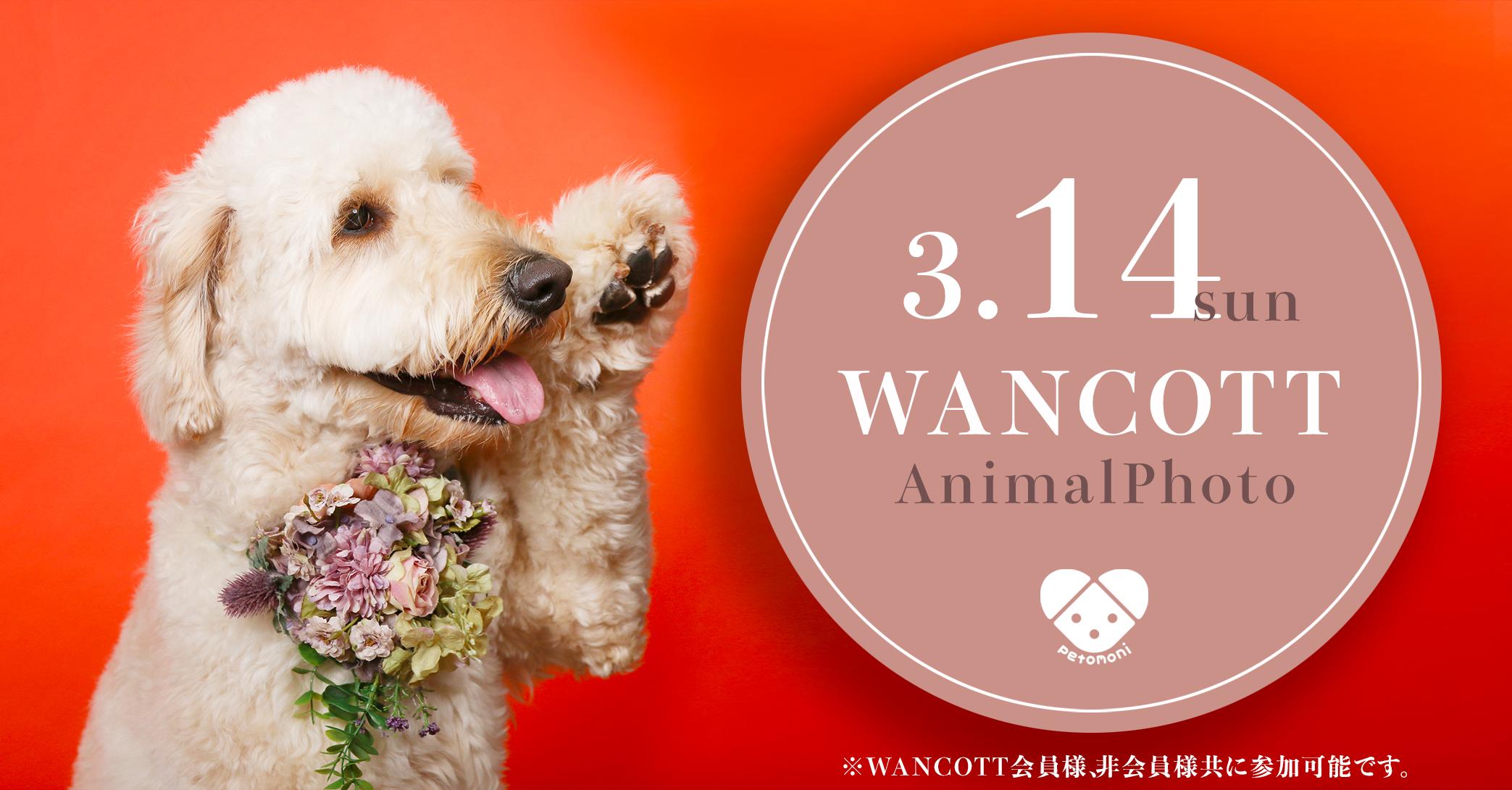 【満枠のため予約締切】3月14日(日) petomoni(ペトモニ)愛犬撮影会開催!