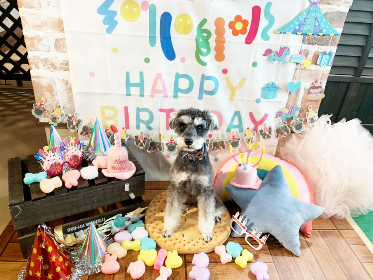 【8月】ドッグパークよりお誕生日プレゼントのご案内です🎁