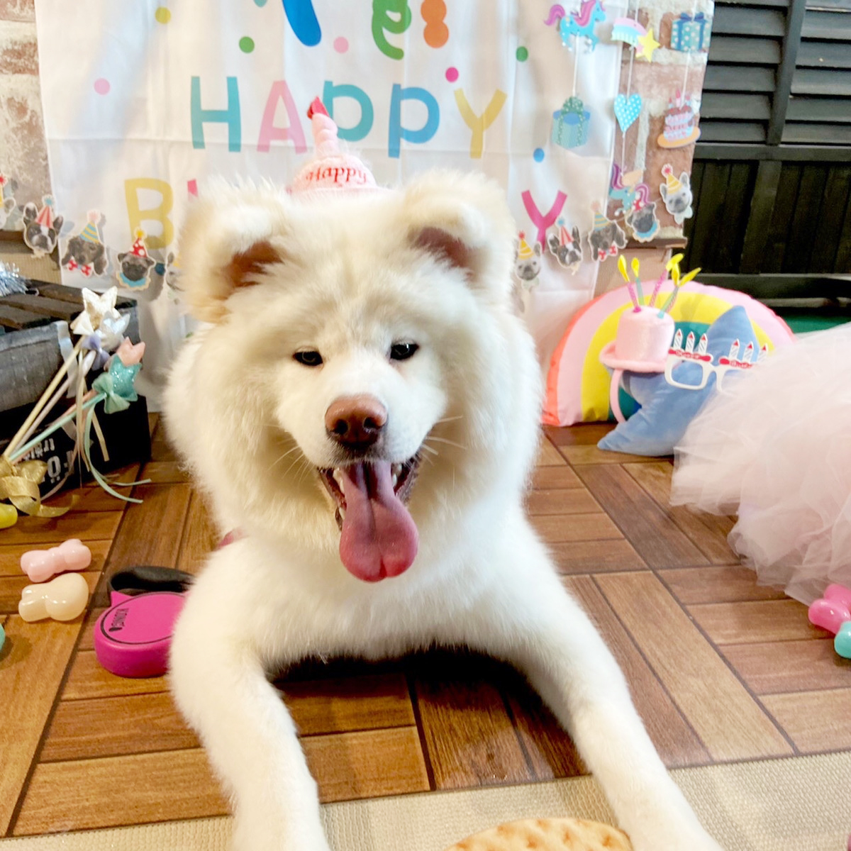 【9月】ドッグパークよりお誕生日プレゼントのご案内です🎁